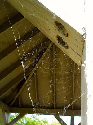 Spider Web Print by Theresa Adams
