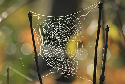Spider's Creation Print by Karol Livote
