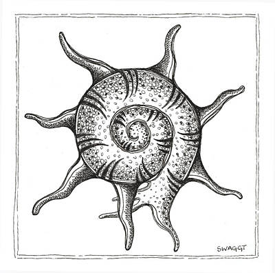 Pen Drawing - Spiney Nautilus by Stephanie Troxell