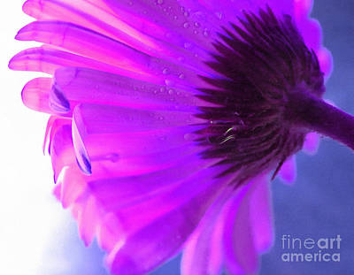 Flower Abstract Photograph - Spirit Light by Krissy Katsimbras
