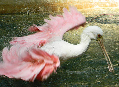 Spoonbill Digital Art - Splish Splash I'm Taking A Bath by Emmy Marie Vickers