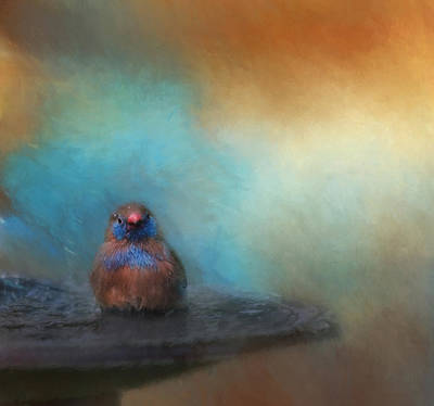Finch Photograph - Splish Splash by Kim Hojnacki