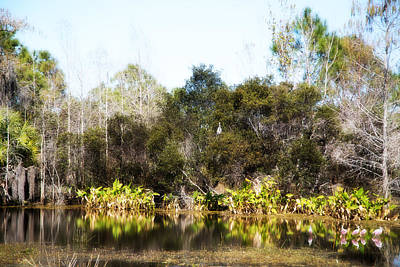 Gorgeous Photograph - Spoon Bill Swamp by J Darrell Hutto