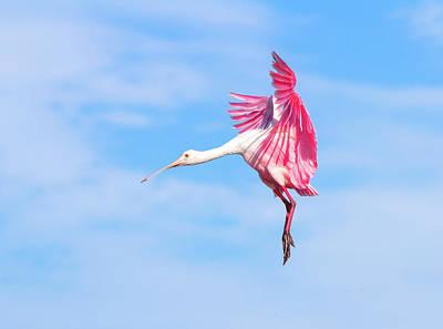 Spoonbill Photograph - Spoonbill Ballet by Mark Andrew Thomas