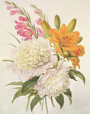 Ladybug Drawing - Sprays Of Gladioli And Peonies  by Henriette Gertruide Knip