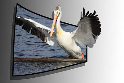 Pelican Mixed Media - Spread Your Wings by Shane Bechler