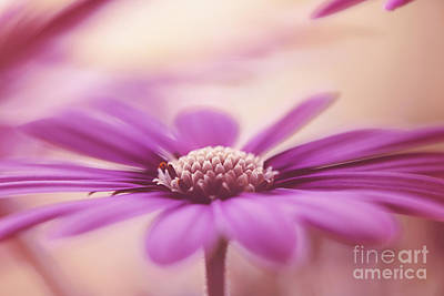 Hjbh Photograph - Spreading My Petals.. by LHJB Photography
