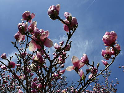 Spring Blooms 2010 Print by Anna Villarreal Garbis