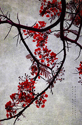 Jenny Rainbow Art Photograph - Spring Bloosom In Maldives. Flamboyant Tree II. Japanese Style by Jenny Rainbow