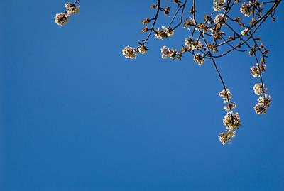 Spring Blossom L Print by Andy Smy