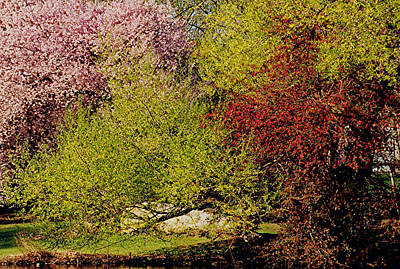 Spring Colors Print by Juergen Roth