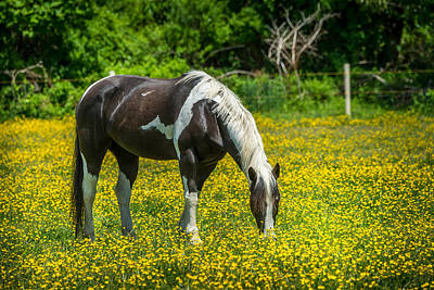 Horse Farm Maryland Photograph - Spring Days by Patrick Wolf