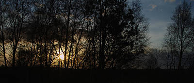 Spring Evening Sunset Through Trees Print by Adrian Wale