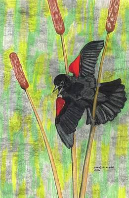Blackbird Drawing - Spring Fever by Don  Gallacher