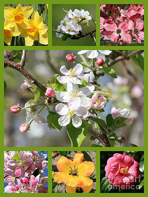Camellia Photograph - Spring Fling Collage by Carol Groenen