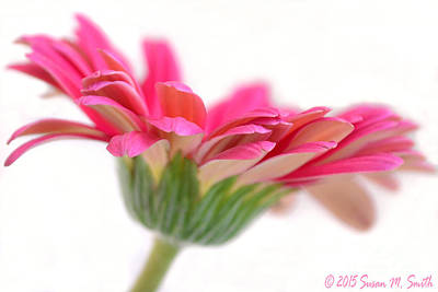 Susan M. Smith Photograph - Spring Fling by Susan Smith