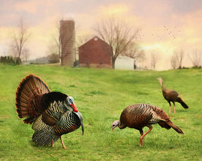 Turkey Digital Art - Spring Gobbler by Lori Deiter
