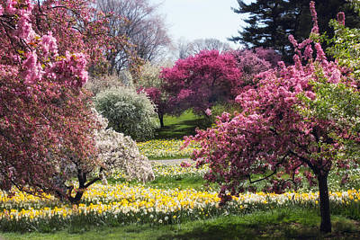 Daffodils Digital Art - Spring Has Sprung by Jessica Jenney