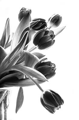 Greyscale Photograph - Spring In Black And White by Maggie Terlecki
