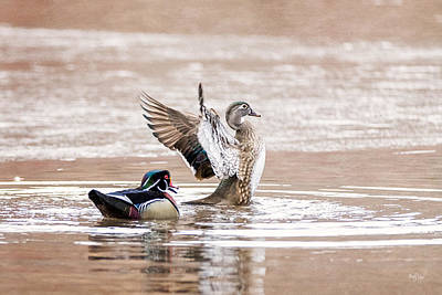 Wood Duck Photograph - Spring Jubilation by Everet Regal