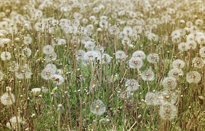 Flower Photograph - Spring Magic by The Art Of Marilyn Ridoutt-Greene