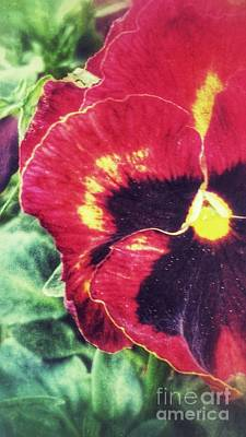 For Busines Photograph - Spring Pansy by Isabella Abbie Shores