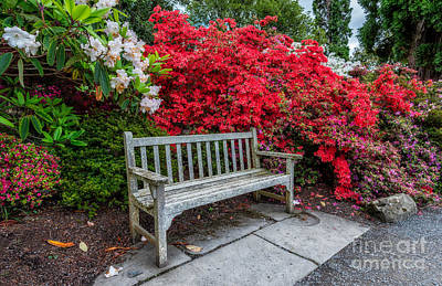 Garden Flowers Digital Art - Spring Park Bench by Adrian Evans