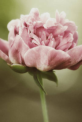 Flowers Photograph - Spring Peony by Tracy  Jade
