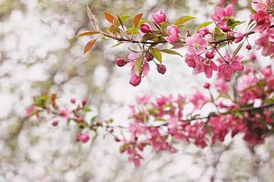 Blossoms Photograph - Spring Pink by Angie Rea