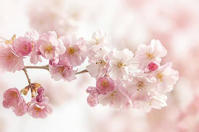 Spring Pinks Print by Jacky Parker