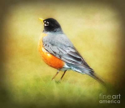 Spring Robin Print by Anita Faye