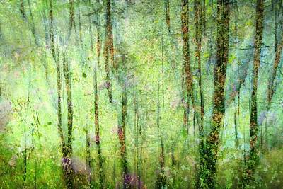 Spring In The Woods Print by Shirley Sirois