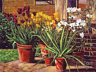 Spring Tulips And White Azaleas Print by David Lloyd Glover