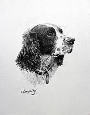 Dogs Drawing - Springer by Karen Loughridge