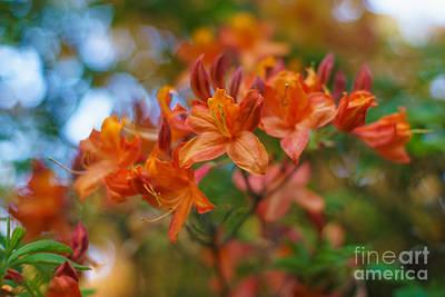 Pistil Photograph - Springs Azaleas Colors by Mike Reid