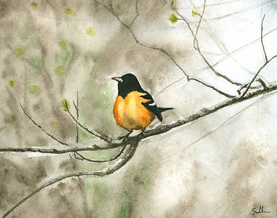 Oriole Painting - Springtime Oriole by Suzanne Sudekum