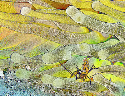 Squat Anemone Shrimp Cartoon Print by Jean Noren