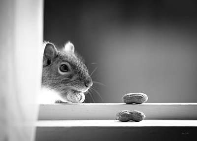 Squirrel And Three Peanuts Print by Bob Orsillo