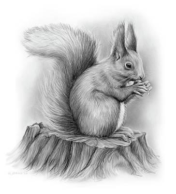 Squirrel Drawing - Squirrel by Greg Joens
