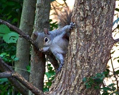 Squirrel I Print by Jai Johnson