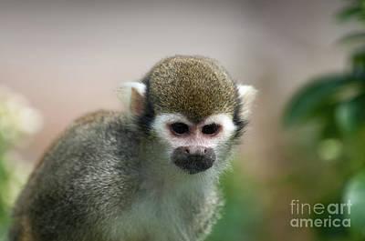 Squirrel Photograph - Squirrel Monkey by Amanda Elwell
