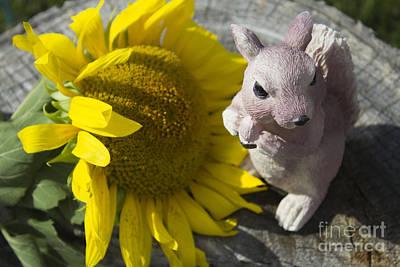 Squirrels Like Sun Flowers Print by Tara Lynn