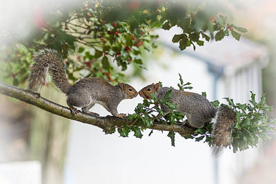 Squirrels Nose To Nose Print by Terry DeLuco