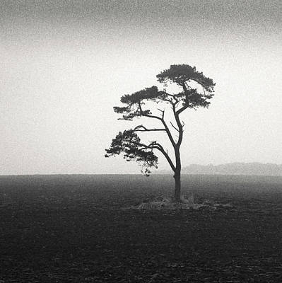 St Cyrus Tree Print by Dave Bowman