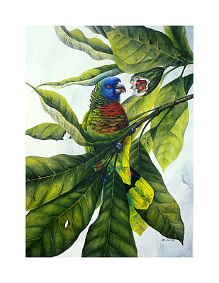 St. Lucia Parrot Painting - St. Lucia Parrot And Fruit by Christopher Cox
