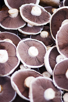 Mushroom Photograph - Stacked Mushrooms by Jorgo Photography - Wall Art Gallery