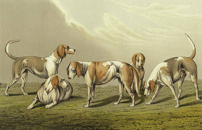 Old Friends Drawing - Stag Hounds by Henry Thomas Alken