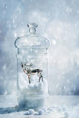 Stag In A Snow Globe Print by Amanda Elwell