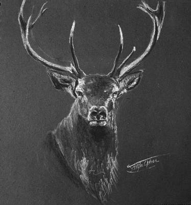 Fury Drawing - Stag by Joseph Upton