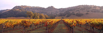 Napa Photograph - Stags Leap Wine Cellars Napa by Panoramic Images